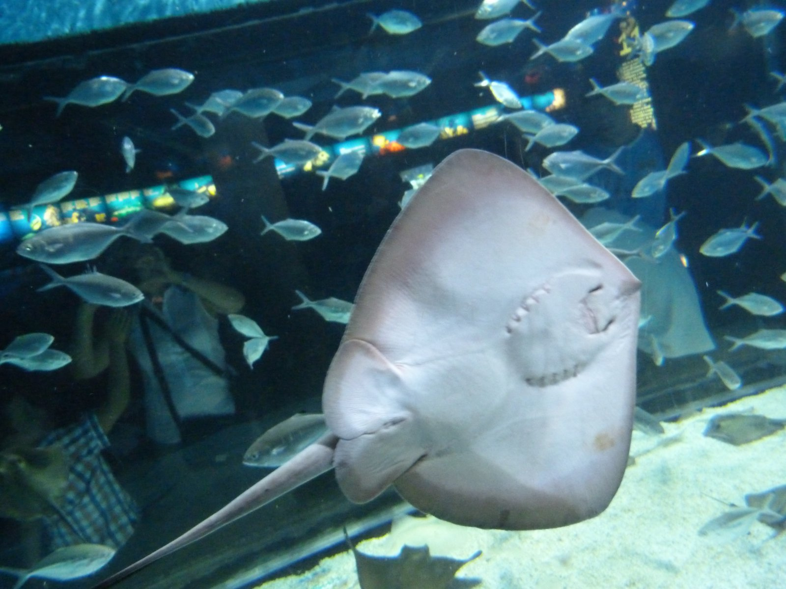 Aquarium de barcelona la lupa viajera Aquarium familia numerosa