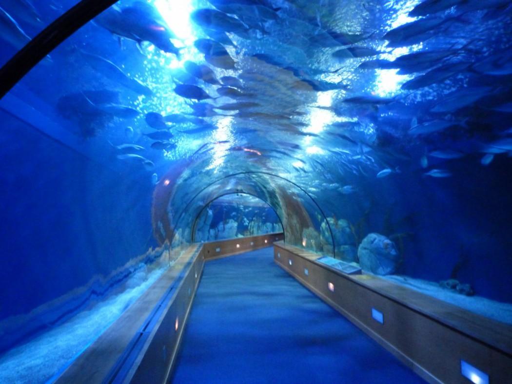 Oceanografic de valencia la lupa viajera for Oceanografic valencia precio 2016
