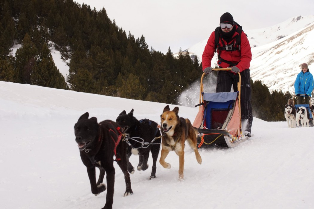 Alex en su Trineo tirado por perros, mushing en Grandvalira, Andorra.