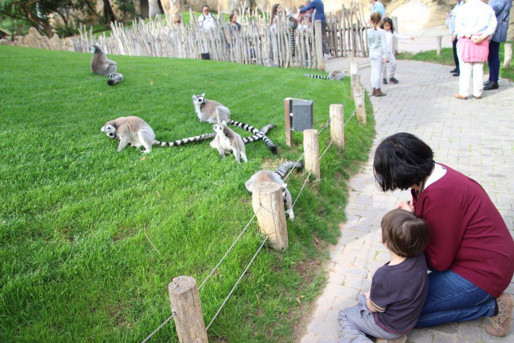Eric y Sandra a pocos centímetros de un lemur. Bioparc Valencia