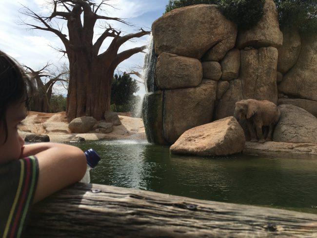 Eric contemplando un elefante. Bioparc Valencia