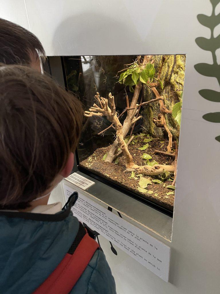 Los niños observan un terrario donde hay insectos. Museo de las ciencias de valencia