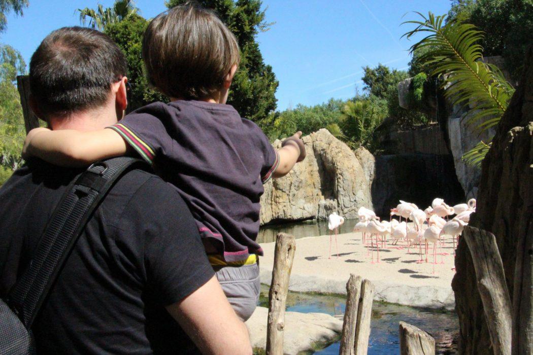 Alex y Eric mirando a los flamencos. Bioparc Valencia