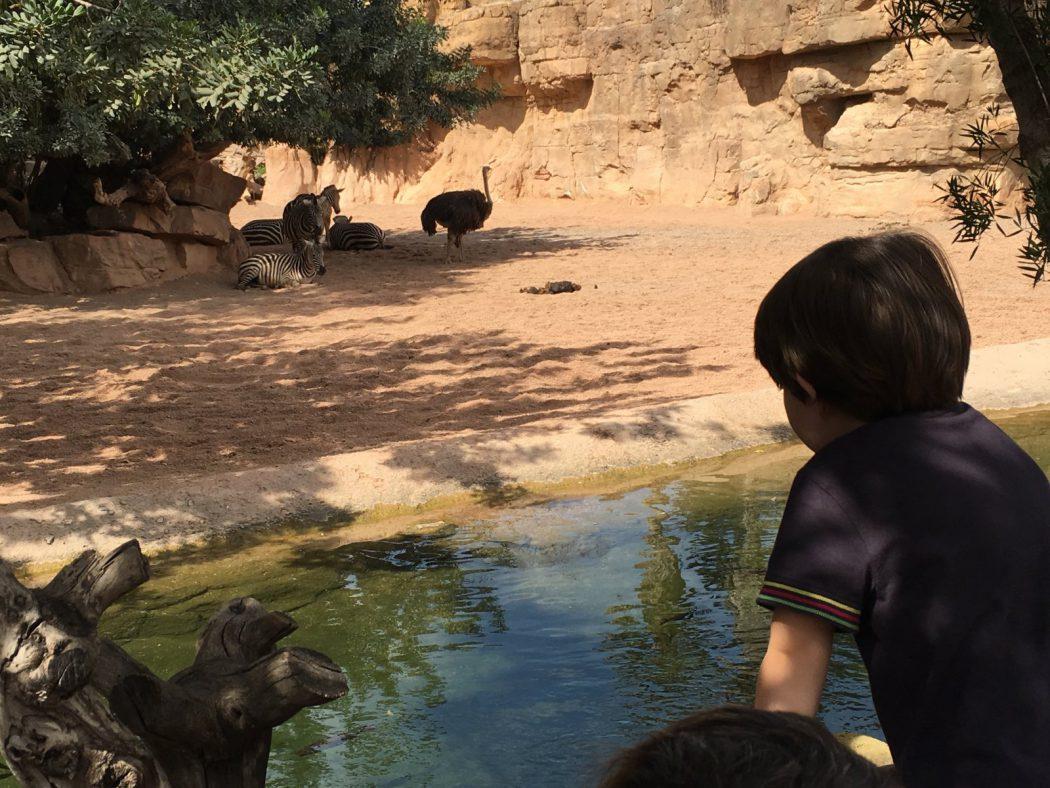 Eric mirando a los animales a lo lejos. Bioparc Valencia